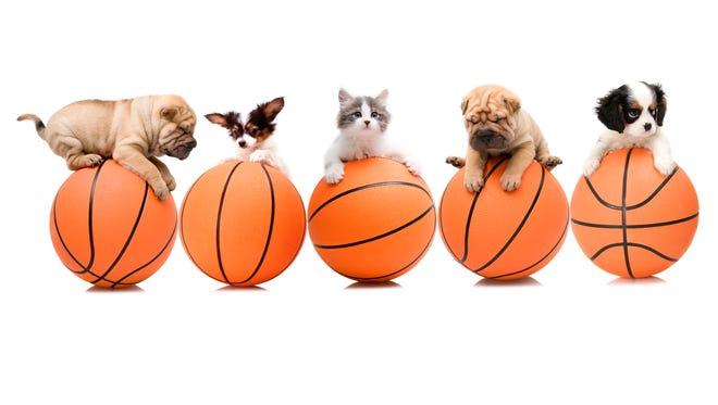 Take the basketball quiz!
