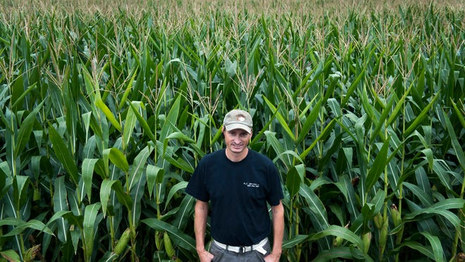 Farmer John Probasco, owner of Probasco Farms in Chesterfield, stands in his GMO corn fields on Friday, August 22, 2014. Probasco grows a combination of GMO and non-GMO crops on his farm, including non-GMO soy beans.