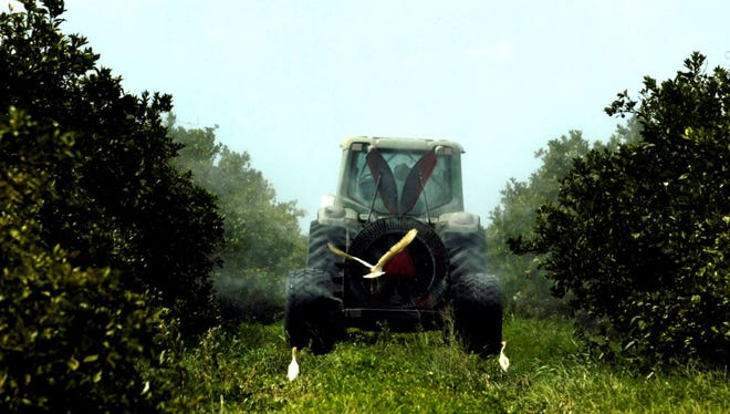 A worker sprays orange trees in a Treasure Coast grove.