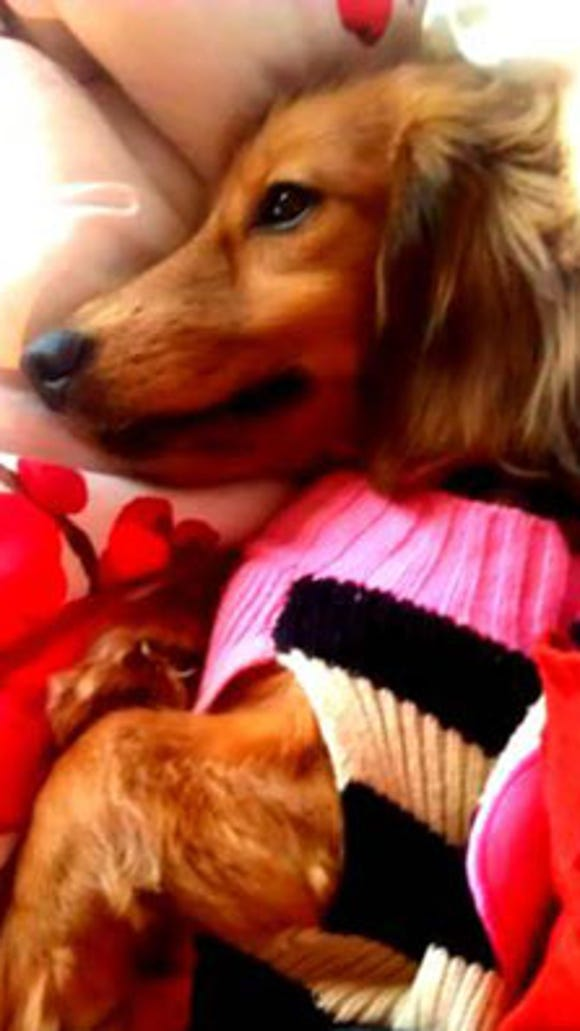 lost-doxie0306