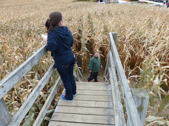 Bridges provide a view of possible paths throughout the corn maze at Homestead Animal Farm.