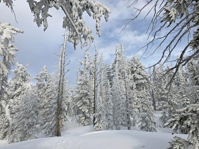 Bristlecone Trail, Markagunt Plateau, Dixie National