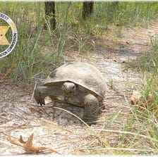MyFWC Facebook image