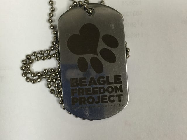 Project pushes for release of test lab dogs, cats