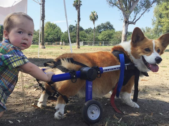 Charlie the corgi has troubles of his own, but those