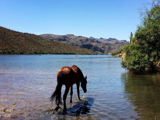 PNI Horses cover