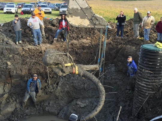 Researchers at the University of Michigan prepare to hoist the remains of a woolly mammoth discovered in a farmer's field near Chelsea.