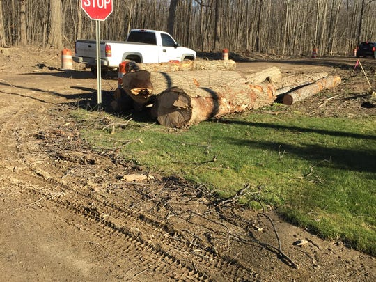 Cut trees can be seen along the sides of Griswold Road in Lyon Township. They were taken down to make way for road paving this summer.