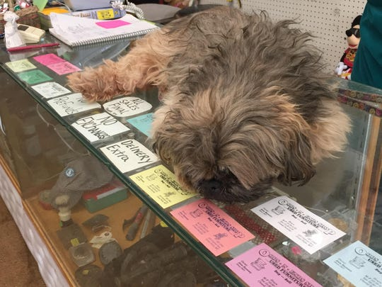 Corky, Ann Ramsey's Shih Tzu, spends his day lounging on the counter at Odds n Ends Shop.