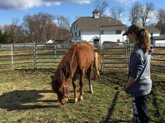 Catherine Zimmerman, 12, with Monche, a two-year old sorrel mustang mare at Seaton Hackney Stables in Morristown.