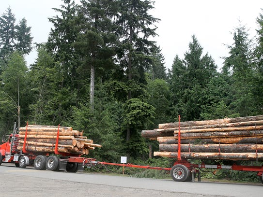 Logs are hauled away from the South Kitsap Regional