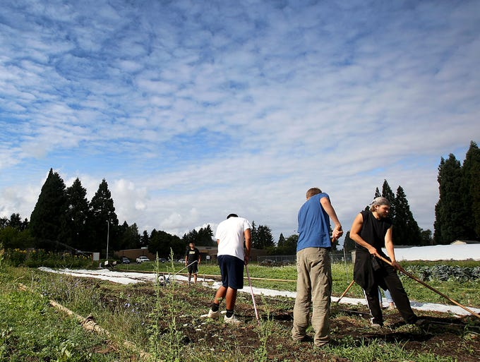 Volunteers work at the Marion-Polk Food Share Youth Farm on Thursday, Aug. 14, 2014, in Salem, Ore.