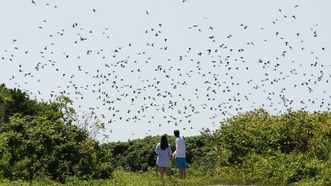Bird watchers at Gooseberry Island in Westport.