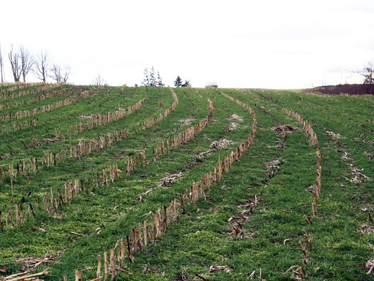 Cover crops help to hold nutrients in the soil and