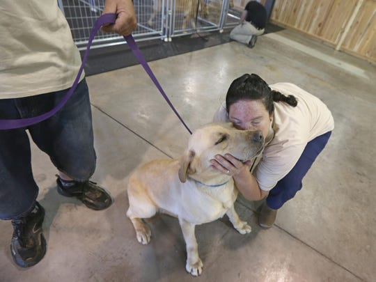 Lauren Yesowitch, Spencerport, gives Toby, a 4-year-old yellow lab, a big hug and kiss, as her husband Mary Yesowitch takes the dog out for a walk.