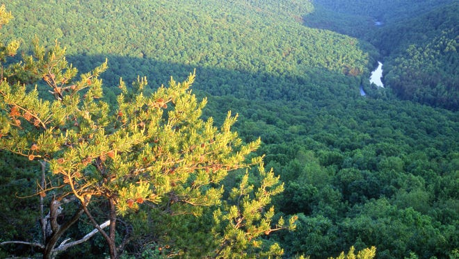Bridgestone Americas donated nearly 6,000 acres of land on the Cumberland Plateau to the Nature Conservancy.