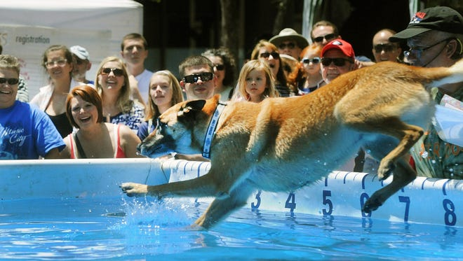 The Ultimate Air Dogs will perform this weekend at Asheville Outlets.