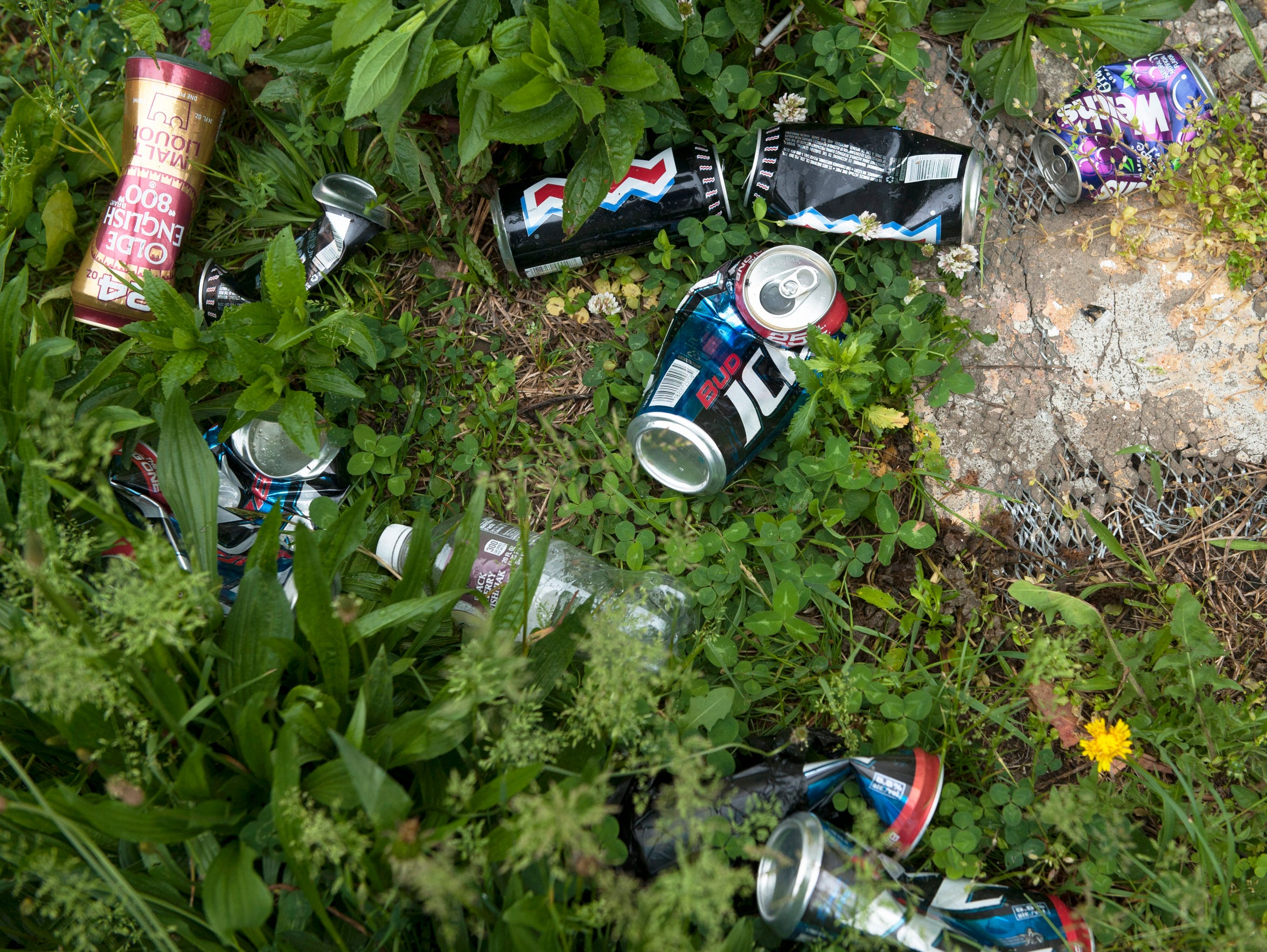 The Evergreen Cemetery in Camden is overgrown and littered