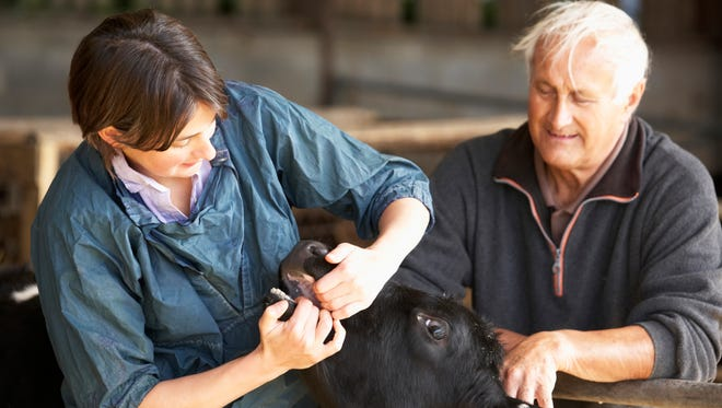 New veterinarians can offset some of the cost of their education by committing to practice food animal medicine in one of six regions of Wisconsin, or in public health statewide under the USDA Veterinary Medical Loan Repayment Program.