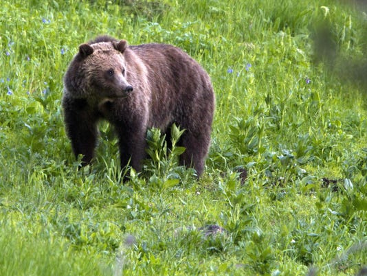 Grizzly Bear Deaths
