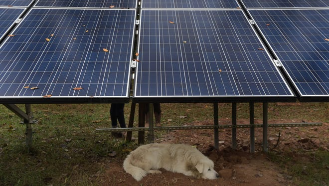 Nevat rests under one of the solar panels at Little Seed Farm in Lebanon.
