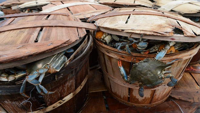 A blue crab hangs outside its bushel basket after being loaded onto a pickup truck at the Cape Charles Harbor on Tuesday, May 10, 2016.