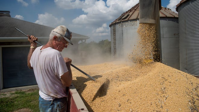 Donald Temme rakes the soybeans as they fill up his truck from the unloading auger at his property near Hogue Road in Evansville, Ind., on Thursday, Sept. 21, 2017. Temme was emptying the grain bins filled with soybeans from last year's harvest to sell at the Archer Daniel Midland grain elevator.