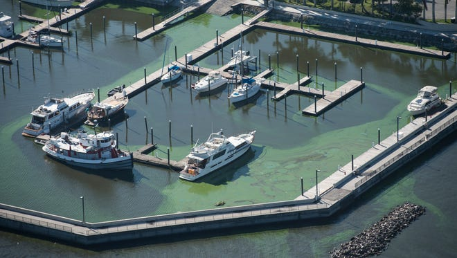 Aerial images show swirls of algae blanketing Lake Okeechobee and the Pahokee Marina on Thursday, July 5, 2018 in Pahokee. Based on satellite images, researchers with NOAA estimate that 90 percent of the 730-square-mile freshwater lake is covered in algae, proven to be toxic with microcystin through tests conducted by the Florida Department of Environmental Protection.