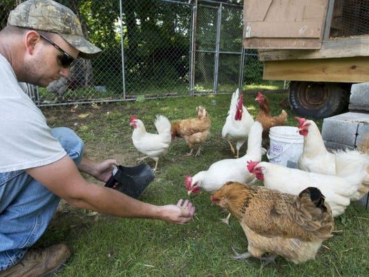 The hens come to Troy Testerman at the Testerman farm in Peach Bottom Township. The coop on wheels is moved around by season to give the hens shade and fresh grass. The family has seen an increase in interest in their eggs as a shortage creeps across the state.