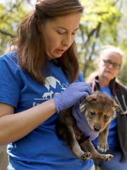 Regina Mossotti, director of animal care and conservation