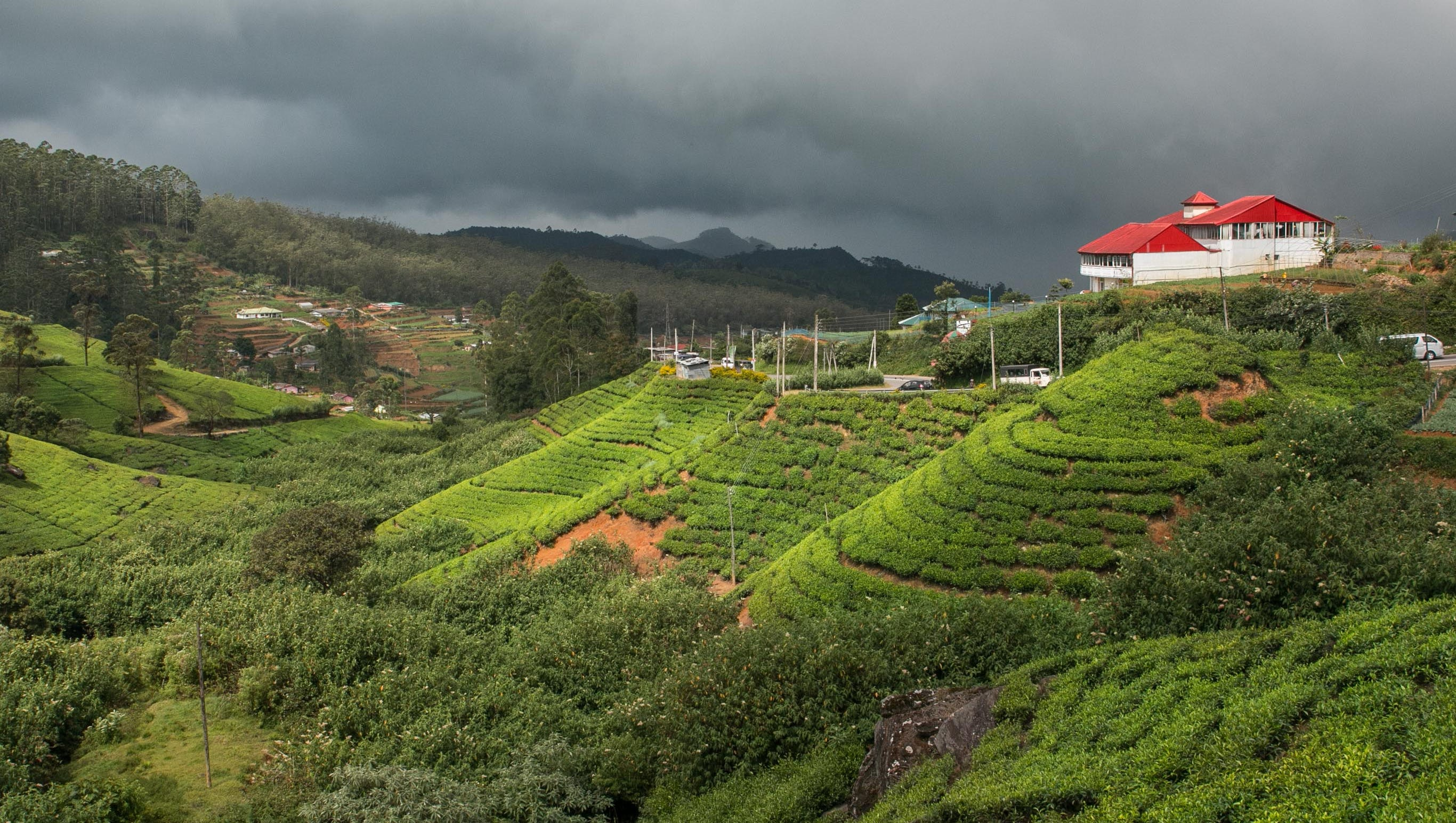 Sri Lanka S Tea Fields Factories And Experiences