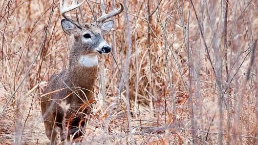 The alternative-methods portion of the firearms deer season began Dec. 26 and ended on Jan. 5.