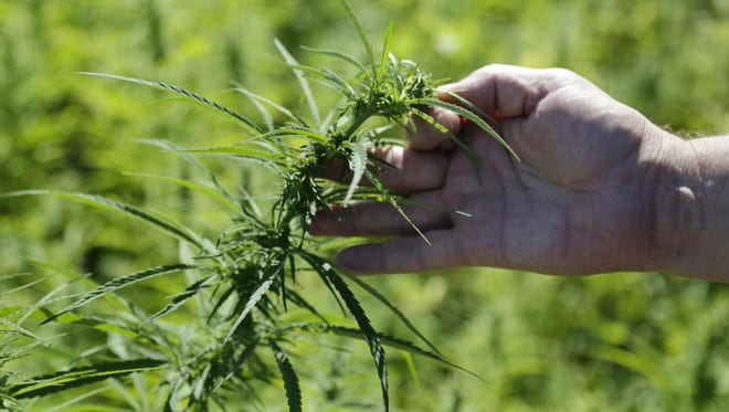 Industrial hemp is illegal to grow in Wisconsin, despite a potential market for it.