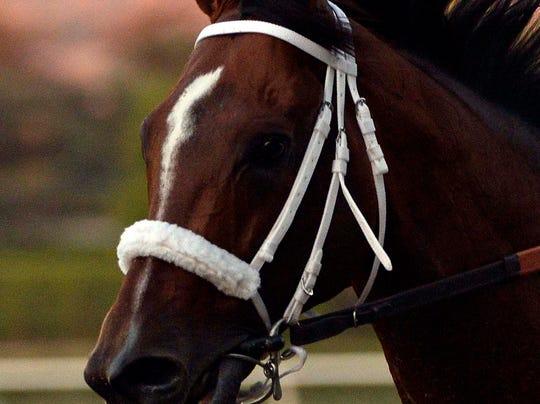 Horse.jpg