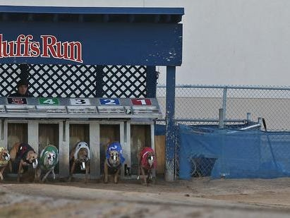 """Race dogs charged out of the starting gate to chase after the mechanical rabbit """" Lucky """" , far right, at Bluffs Run Greyhound Park in Council Bluffs."""