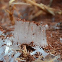Needle ice grows in the soil when the air temperature is below freezing and the ground is not yet frozen.