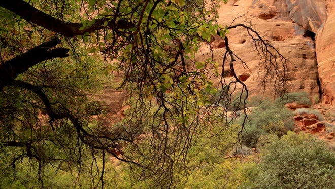 The end of the Johnson Canyon Trail in Snow Canyon State Park is filled with trees and other greenery.
