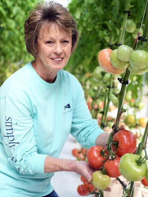 Beth Tucker grows tomatoes hydroponically in Forrest County. Pine Belt residents can find them locally at spots including Corner Market and the Lil' Butcher Shoppe.