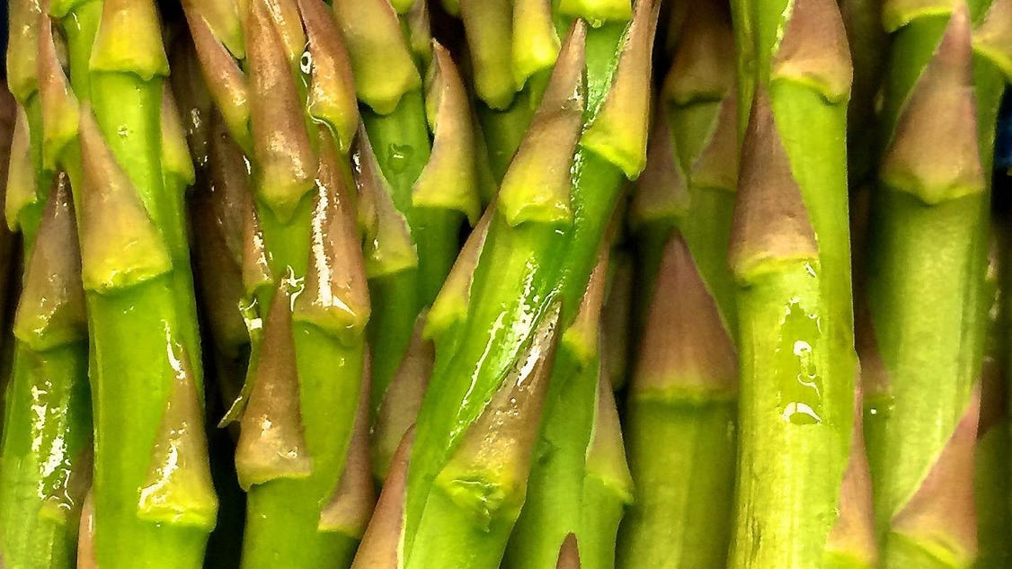 Long lived asparagus plants can last decades for Plants that live long