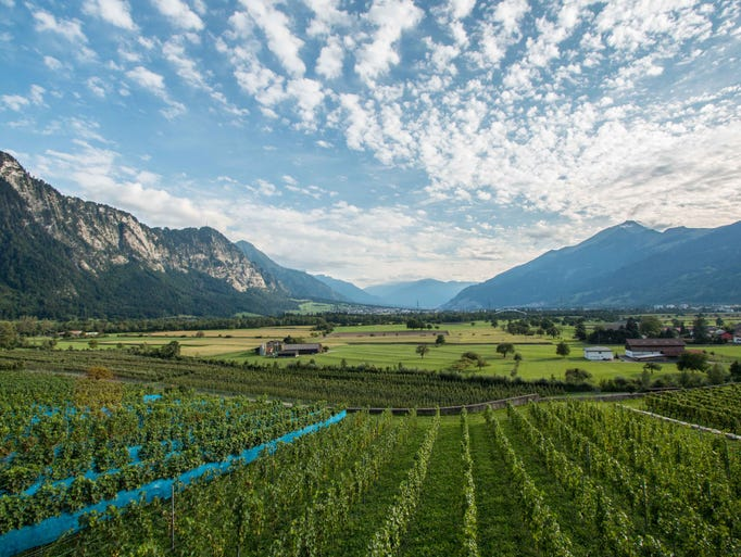 In the picturesque Bündner Herrschaft, producers cultivate