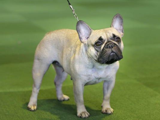Dog Breeds (2)