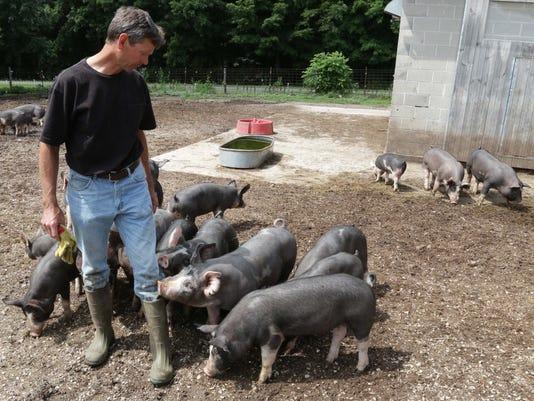 Berkshire pigs LEAD.jpg