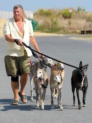 Greyhounds Return To Dewey Beach