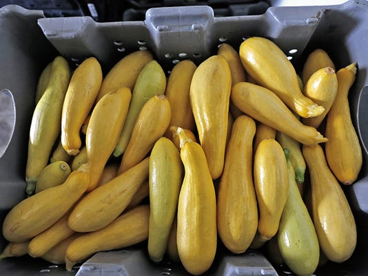 Squash is pictured Tuesday at Sutherland Farms in Aztec.
