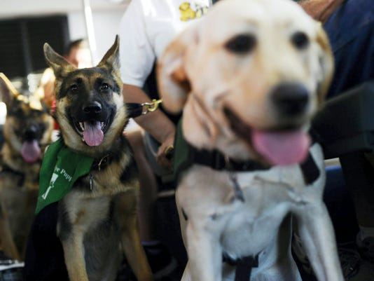 From left Ian, Izzie, and Honey, all seeing eye dogs in training, ride a Rabbit Transit bus to the York Fair Tuesday, September 15, 2015. Members of the Loving Eyes 4-H Seeing Eye Puppy Club rode the bus from West Manchester Town Center to the York Fair with the seeing eye dogs as part of their training. Kate Penn — Daily Record/Sunday News