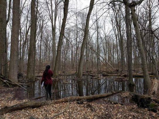 Rich in biodiversity, vernal pools have been called