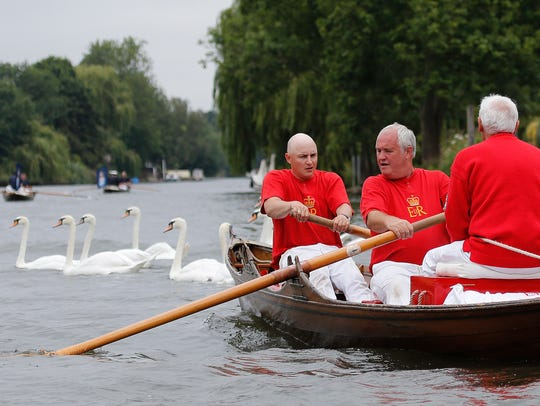 Queens Swan Markers pass swans during the annual count
