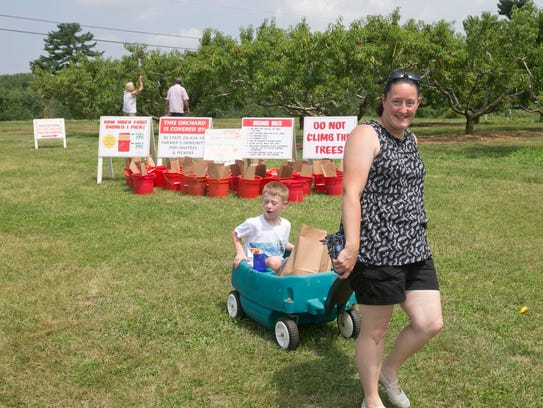 Peach picking at Battleview Orchards in Freehold.