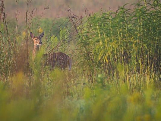 pheasant count kilen