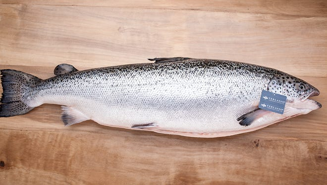 A farmed salmon from Verlasso in Chile.